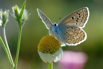 vlinder05-gr